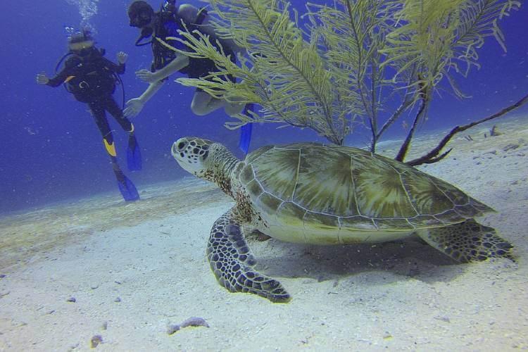 best scuba tips for beginners