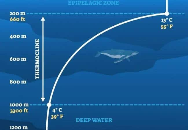 thermocline in the ocean