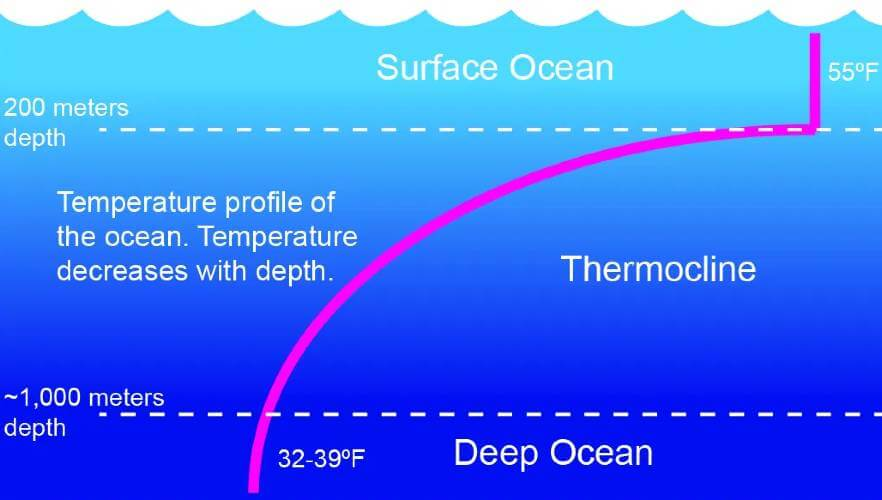 what is thermocline