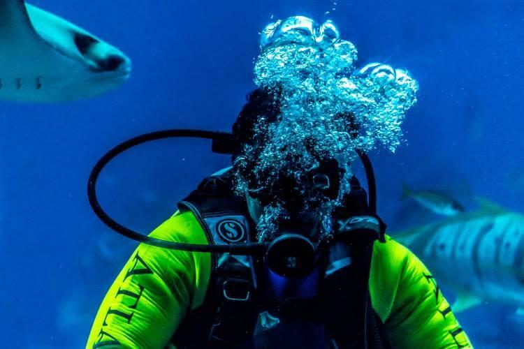 octopus in scuba diving