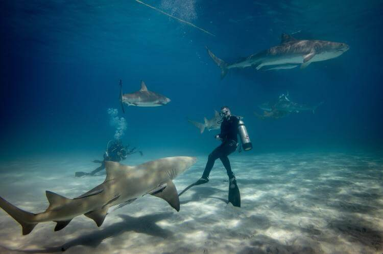 seeing a shark while scuba diving